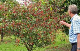 احداث باغ میوه