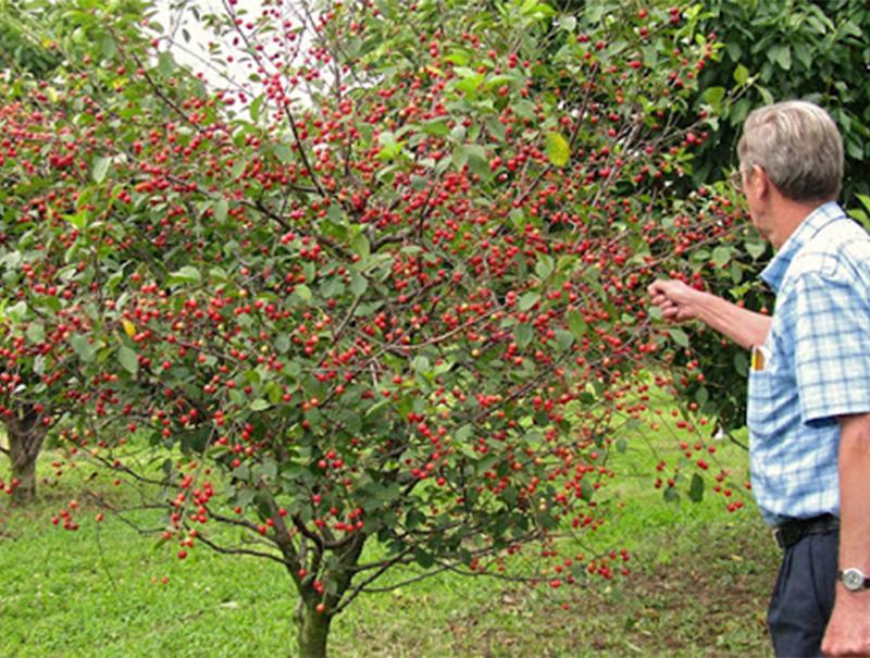 طراحی انواع باغ میوه