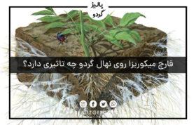 قارچ میکوریزا روی نهال گردو چه تاثیری دارد؟