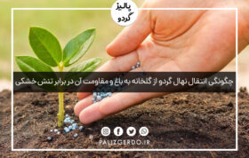 چگونگی انتقال نهال گردو از گلخانه به باغ و مقاومت آن در برابر تنش خشکی