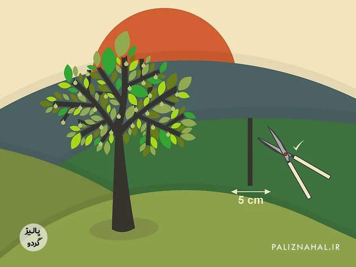 چگونه درخت گردو را هرس کنیم؟