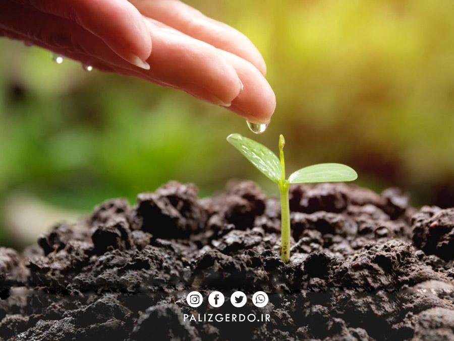 اهمیت آبیاری نهال گردو چیست؟