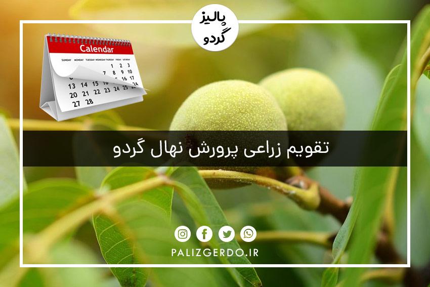 تقویم زراعی پرورش درخت گردو