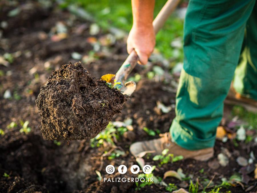 خاک مناسب برای کاشت نهال گردو چه خصوصیاتی دارد؟