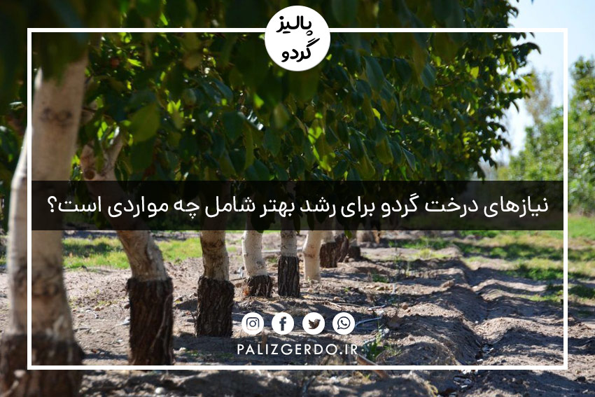 نیازهای درخت گردو برای رشد بهتر شامل چه مواردی است؟