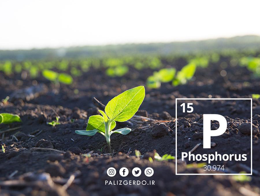اهمیت سهم فسفر برای درخت گردو و تاثیر آن در رشد گیاه