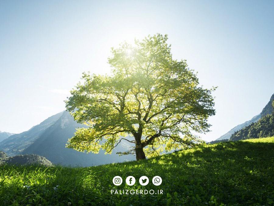 نیاز درخت گردو به نور خورشید