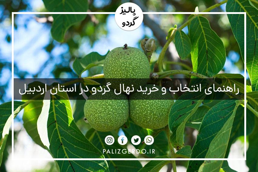 راهنمای انتخاب و خرید نهال گردو در استان اردبیل