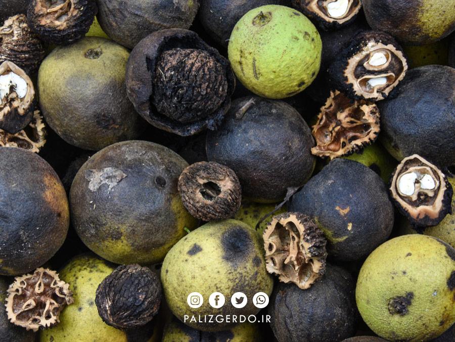 سیاه شدن گردوها ناشی از اثرات قارچی