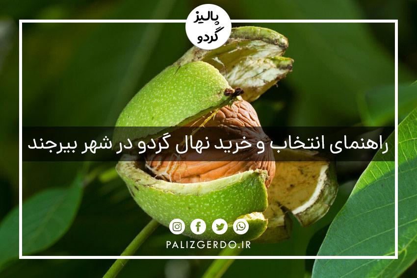 خرید و فروش انواع ارقام نهال گردوی جهاد کشاورزی در شهر بیرجند