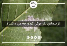 از بیماری لکه برگی گردو چه می دانید؟